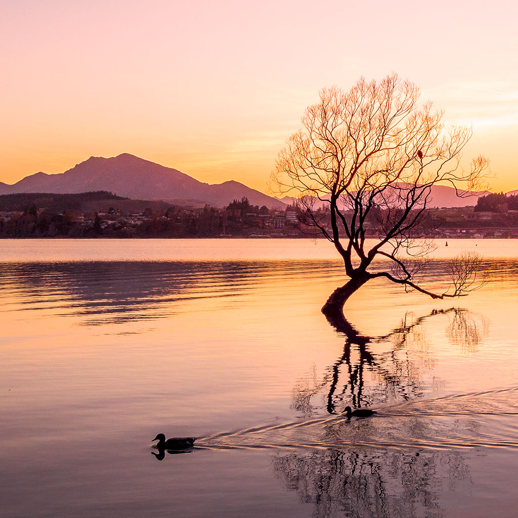 That Wanaka Tree - Queenstown Motorhome Rentals